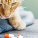 Koronavírus: Liečba z čierneho trhu pre mačky s infekčnou peritonitídou  je nezákonná, ale zachraňuje tisíce životov