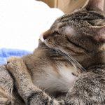 O FIP a její léčbě z blogu Bella nechce FIP