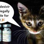 Veterinári teraz môžu vďaka COVIDU legálne liečiť FIP u mačiek